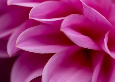 flower-closeup03