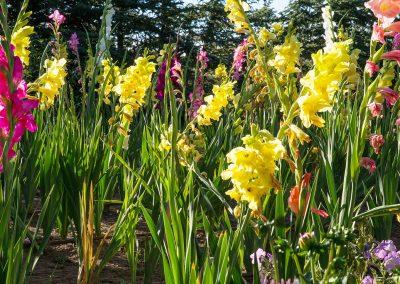flower-garden01