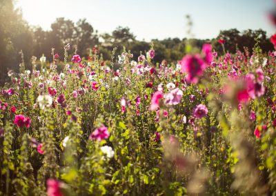 flowers-sun01