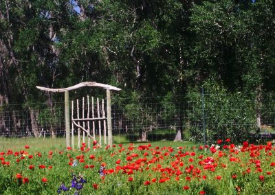 gate-poppies-1
