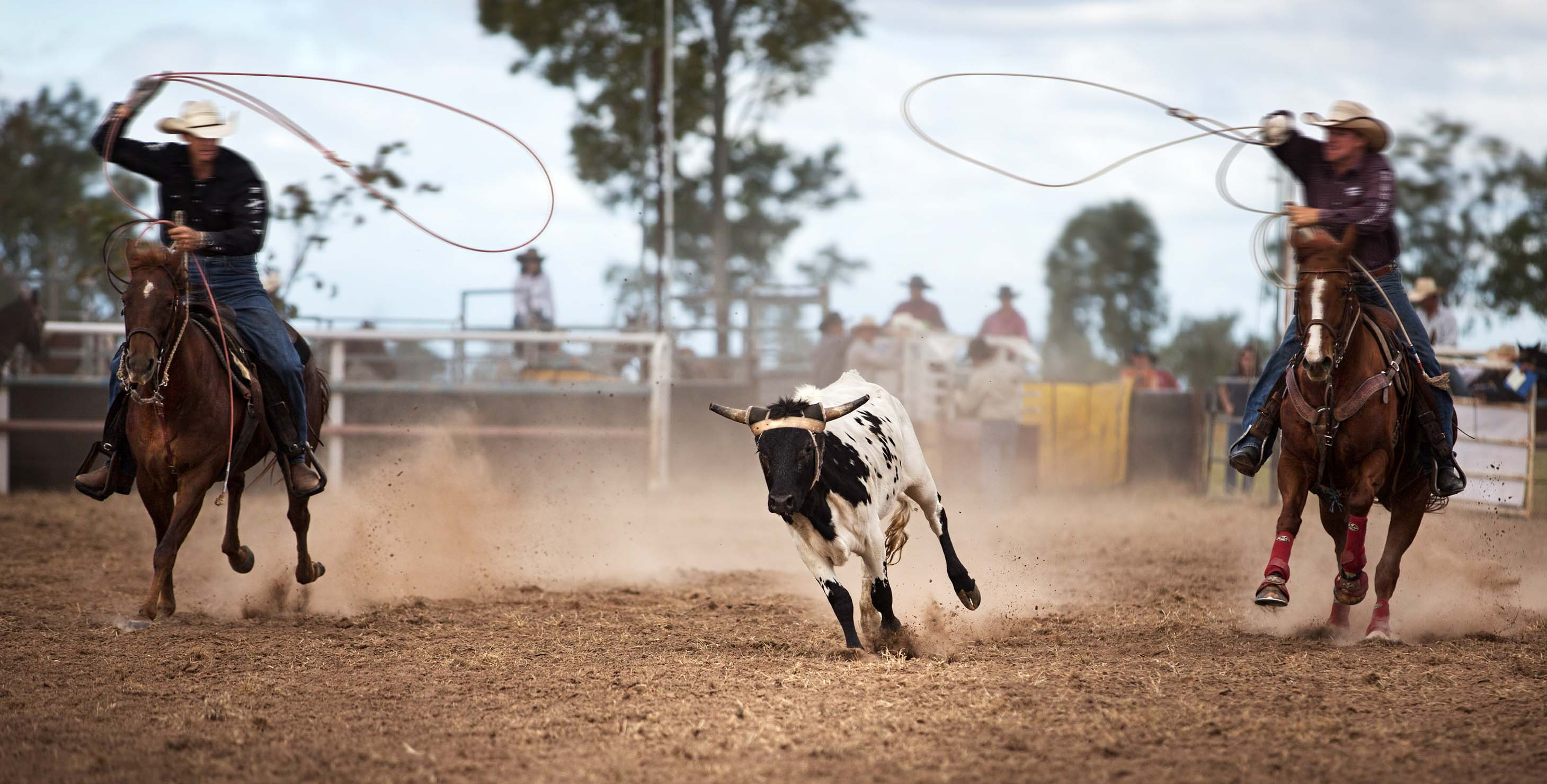 Two cowboys try to lasso a bull at a rodeo