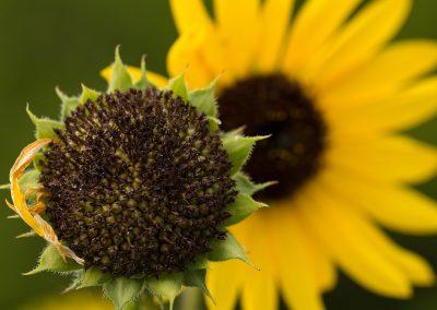 flower-closeup06
