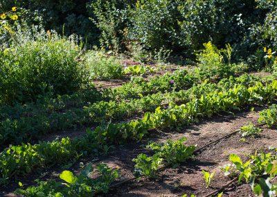 garden-wide