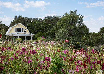 hollyhocks-mountain-view-suite