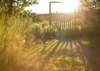 sunset-walkway