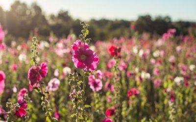 5 Reasons You Should Spring Break In Durango